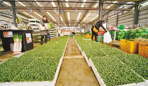 农贸批发商单价表-双福农贸城50万吨农产品保 双节 供应图片