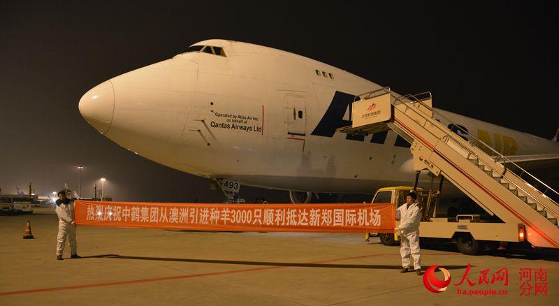 装载种羊的飞机顺利抵达新郑机场