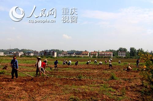 花卉苗木基地帮助农民致富