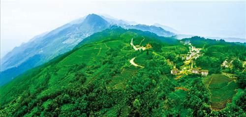 茶山竹海国家森林公园