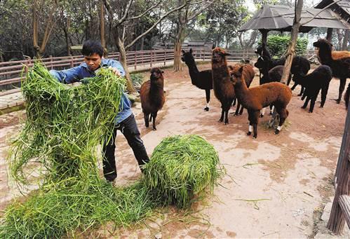 重庆市动物园:今年春节