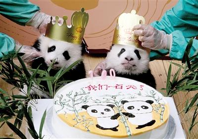 """大熊猫双胞胎宝宝大双和小双""""百日""""见面会,熊猫宝宝向市民卖萌."""