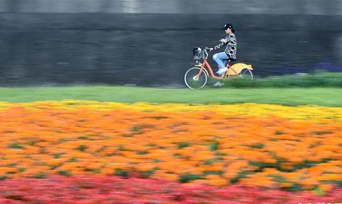 台北河滨公园花团锦簇