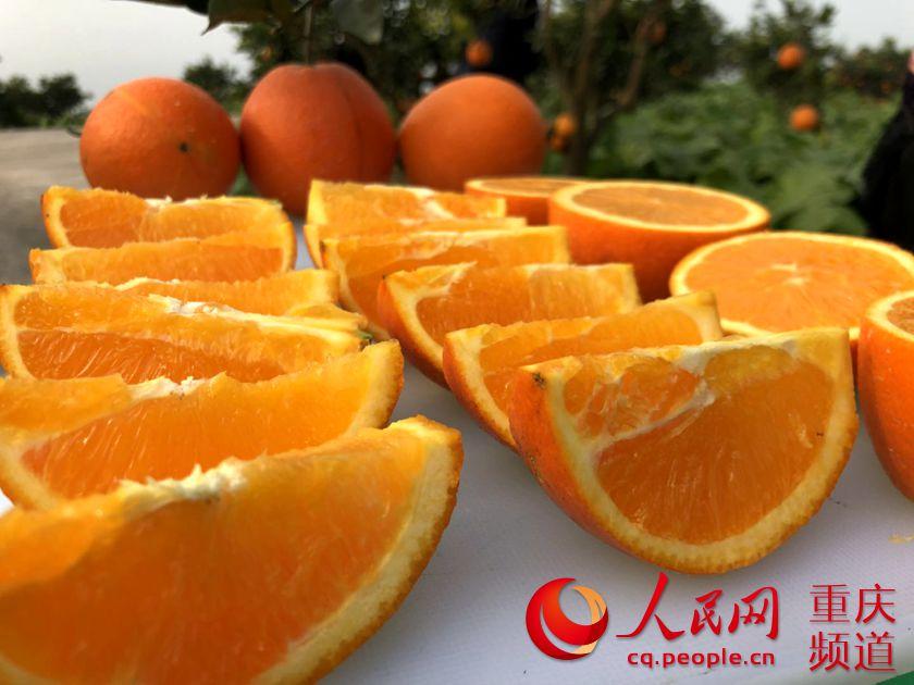 """涪陵南沱镇睦和村:千亩脐橙结出""""幸福果"""""""
