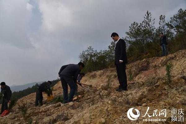重庆:办一个案修复一片生态 5年补植复绿27万株