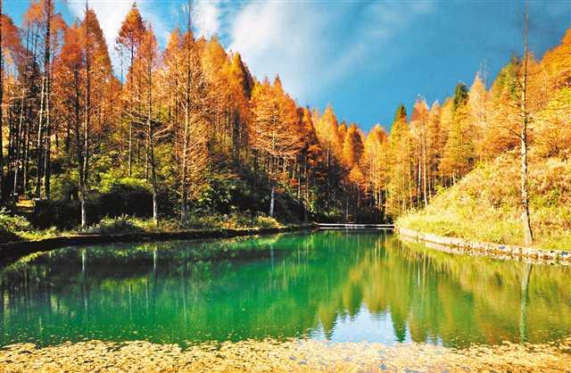 造林又造景 治土又治污