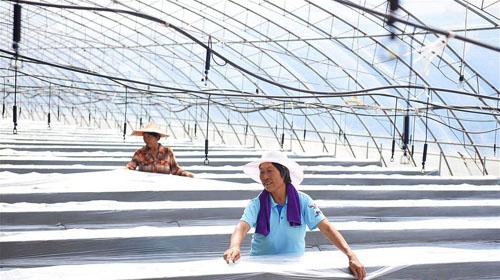 农旅融合助增收