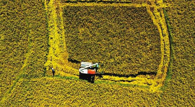 梁平:水稻机收率达97%