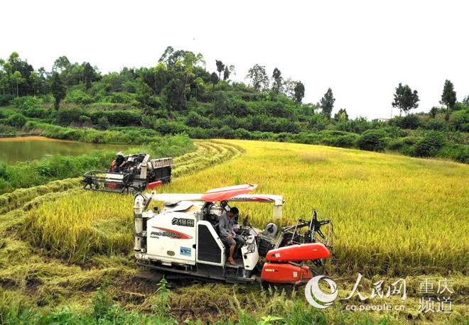 铜梁:首个全产业链稻米专业合作社破解增收难题