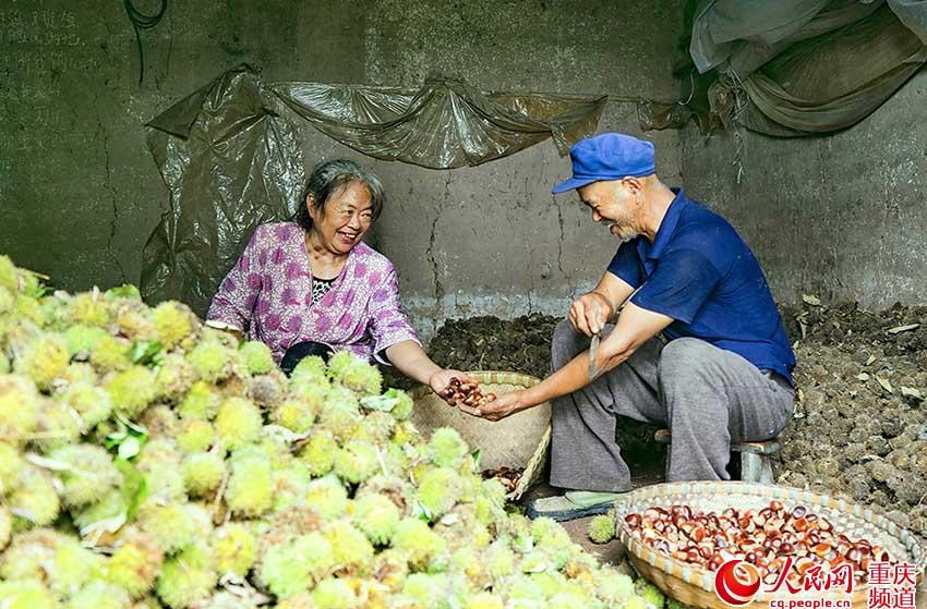 重庆:稻花香里说丰年 农民晒秋喜开颜