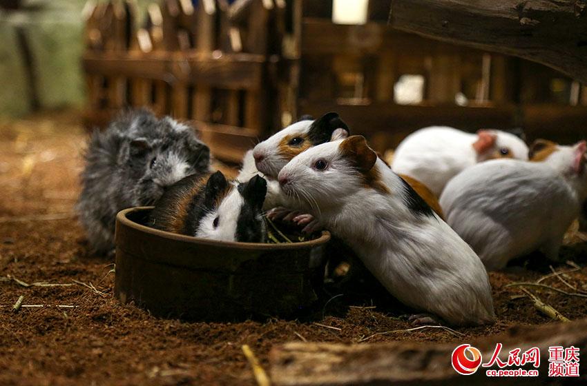 """""""萌宠""""进商圈 重庆首个室内动物园受追捧"""
