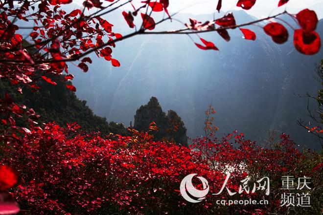 巫山神女景区红叶节开通北环线游