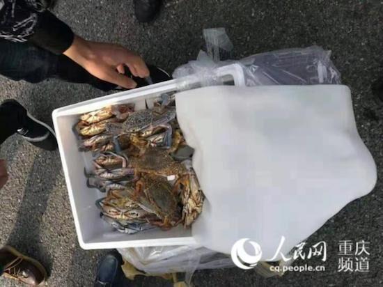 重慶市民有口福了 國外海鮮通關最短只需半小時