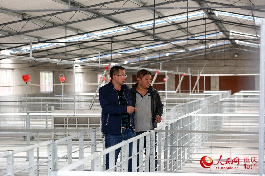 李大军(左一)介绍即将投用的养猪场。何超摄