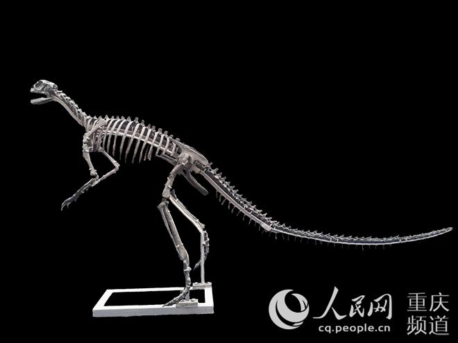 云阳现亚洲最早新鸟臀类恐龙化石距今1.7亿万年