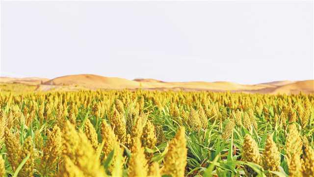 重庆专家团队完成沙漠生态恢复建设17000亩