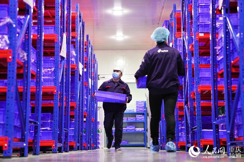 2月10日,位于重庆市大渡口区的重庆中元汇吉生物技术有限公司复工复产。罗嘉摄