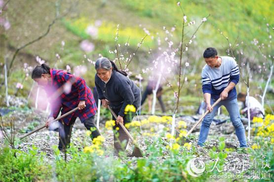 巫溪天元:春耕春产动起来复生产