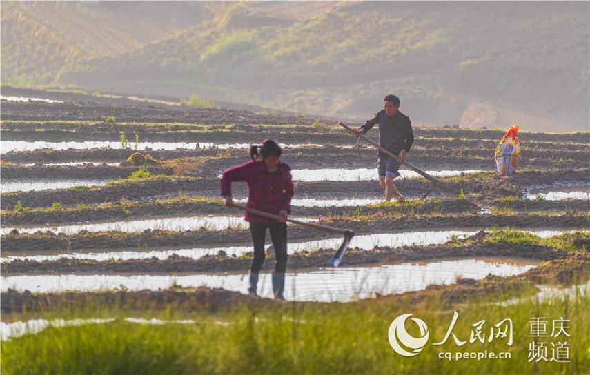5月2日,重庆市南川区石溪镇盐井村村民在朝阳下忙碌。 瞿明斌 摄