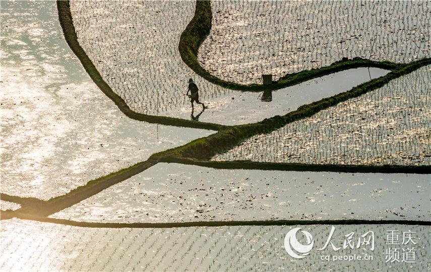 5月2日,重庆市南川区南城街道清泉社区村民在插秧。 瞿明斌 摄