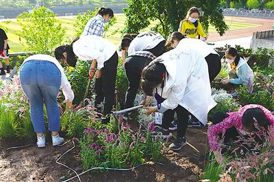重庆一学校开辟开心农场种瓜得瓜种豆得豆