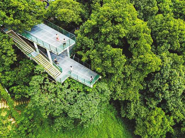 主城�e的空中森林步道