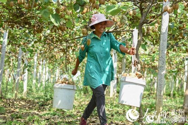 贵州松桃:产业发展 农民增收