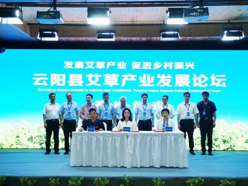 小艾草孕育大产业云阳推动中药材产业高质量发展