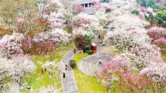 春来花开艳满城一路繁花一路景